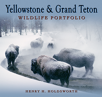 Yellowstone and Grand Teton Wildlife Portfolio align=