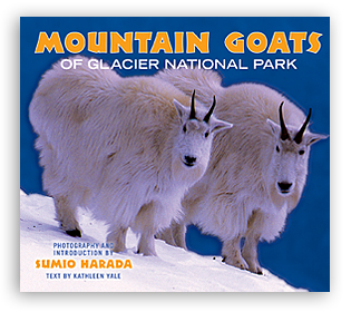 Mountain Goats of Glacier National Park align=