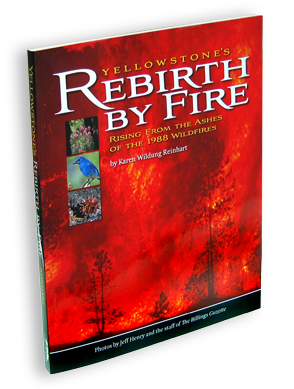 Yellowstone's Rebirth by Fire align=