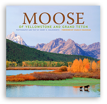 Moose of Yellowstone and Grand Teton align=