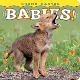 Grand Canyon Babies align=