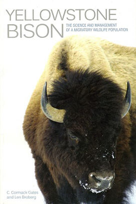 Yellowstone Bison align=