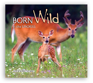 Born Wild in the Smokies align=