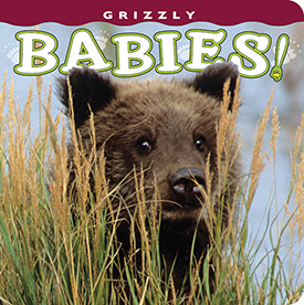 Grizzly Babies align=