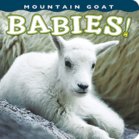 Mountain Goat Babies align=