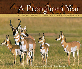 A Pronghorn Year align=