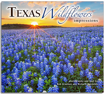 Texas Wildflowers Impressions align=