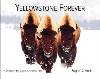 Yellowstone Forever align=